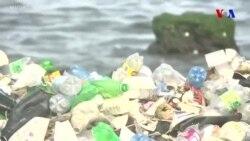 Dənizdəki plastiki ölçmək üçün dəniz heyvanlarından istifadə olunur