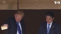 Tổng thống Trump cho cá ăn ở Nhật