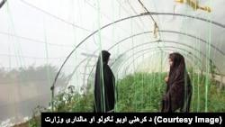 د شمیرنو له مخې د افغانستان د نفوس شاوخوا ۸۰ فیصده خلک چې ښځې هم په کې شاملې دي د کرهڼې په سکټور کې کار کوي.