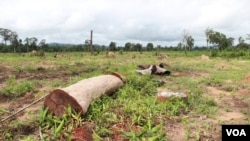 FILE - Remnants of a forest are seen cut down for a land concession in Ratanakiri Province, Cambodia, Aug. 26 2014. (Nov Povleakhena/VOA Khmer)