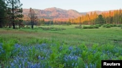 Ackerson Meadow, a 400-acre parcel of land located at the western edge of Yosemite National Park, is shown in this undated photo in California.