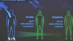 Нобелевская премия-2011 по медицине