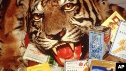 Tiger skins as well as Chinese medicines containing tiger and rhino parts confiscated by the USFWS at the Los Angeles Airport.