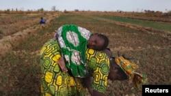 Une cultivatrice malienne à Heremakono, au Mali (Reuters)