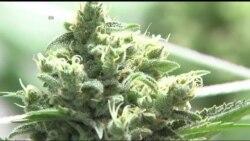 Легалізація марихуани у США: 2016 видався монументальним роком для індустрії. Відео