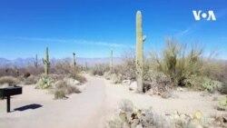 Nəhəng kaktuslar diyarında