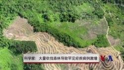 科学家:大量砍伐森林导致罕见疟疾病例激增