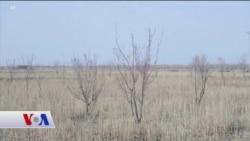 Ağaç Dikerek Aral Gölü'nü Kurtarmaya Çalışıyorlar