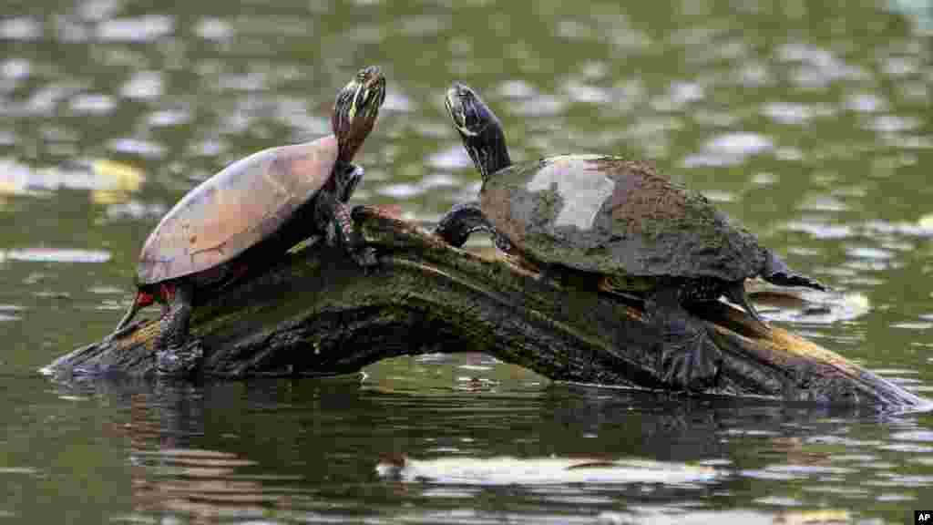 تغییرات اقلیمی و گرم شدن زمین زندگی حیوانات زیادی را با خطر مواجه ساخته است