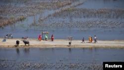 سندھ میں بارشوں اور سیلاب سے متاثرہ زرعی زمین (فائل فوٹو)