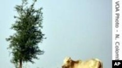 Sénégal : les écoliers et leurs parents s'attaquent à la désertification