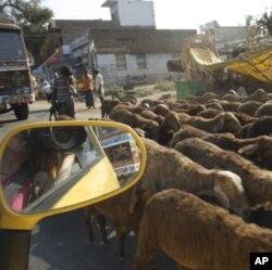 Nano Diaries: Tiny Car Makes Big India Road Trip