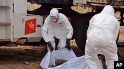 Petugas kesehatan memindahkan jenazah seorang dari jalanan di Monrovia, Liberia yang diduga tewas akibat ebola (12/8).