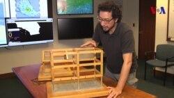 Experto explica sismos de la costa pacífica