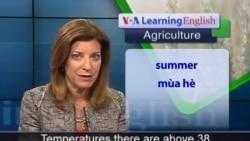 Anh ngữ đặc biệt: Immigration Reform Agriculture (VOA)