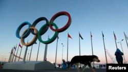 Cincin Olimpiade di Olympic Park, empat hari sebelum pembukaan Olimpiade Musim Dingin di Sochi, Rusia (3/2). (AP/Robert F. Bukaty)