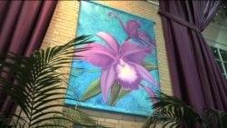 美国万花筒: 春天绽放 华盛顿国家植物园举办兰花展