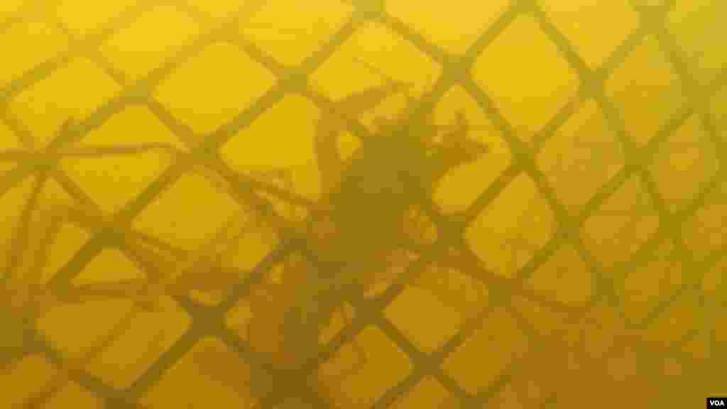 受困网中的小龙虾(美国之音刘恩民拍摄)