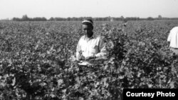 A farmer picks cotton in rural Uzbekistan. Photo credit: Russell Zanca.