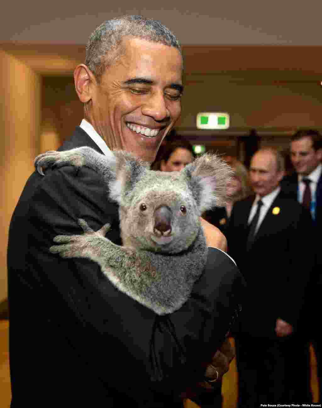 Le président prend dans ses bras un Koala lors de son passage pour le G20 en Australie, à Brisbane, le 19 novembre 2014.