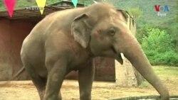 Pakistan's President Bids Farewell to Lonely Elephant