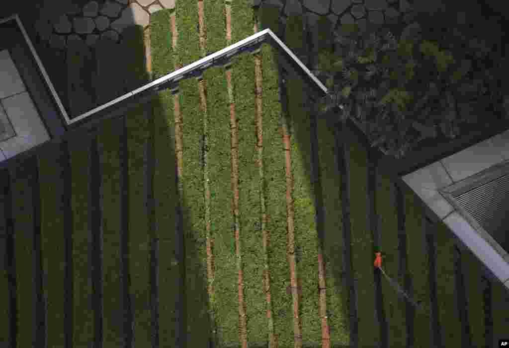 باغبانی مشغول آب دادن به باغچه ای بر بام ساختمانی در منطقه تجاریکوالالامپور (مالزی) است.