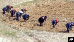 북한 묘향산 주변 농장에서 여성들이 일하고 있다.
