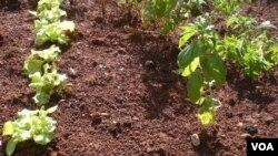 El conocimiento de las labores de la tierra es uno de los tantos conocimientos culturales que se han ido perdiendo.
