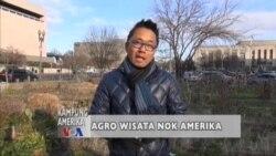 Kampung Amerika: Agro Wisata di Amerika