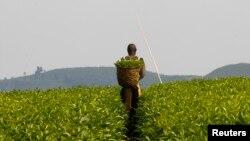 L'accaparement des terres pour y installer de vastes plantations suscite de vives controverses en Afrique subsaharienne