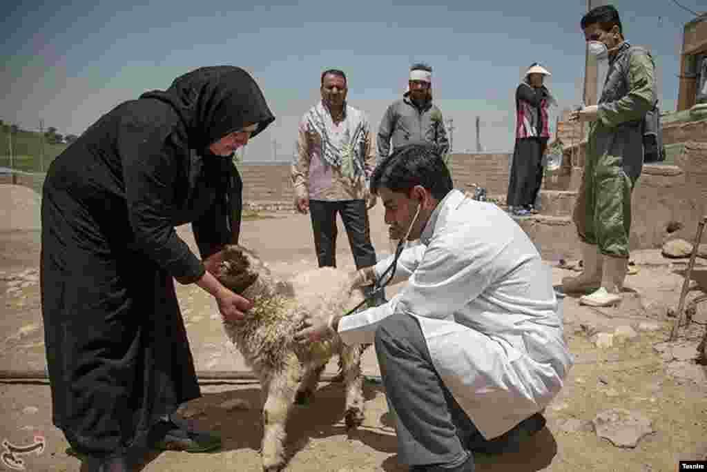 واکسیناسیون و ویزیت رایگان دام در روستاهای طاویران، درفیروزآباد شهرستان کرمانشاه عکس:فرزاد منتی