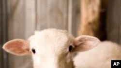 قربانی کے جانوروں کی خرید و فروخت