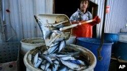 El déficit comercial de pesca en #EEUU está creciendo y la administración Trump busca reducirlo. El país importó más de 6.000 millones de libras de pescado y marisco en 2017, según la Oficina Nacional de Administración Oceánica y Atmosférica.