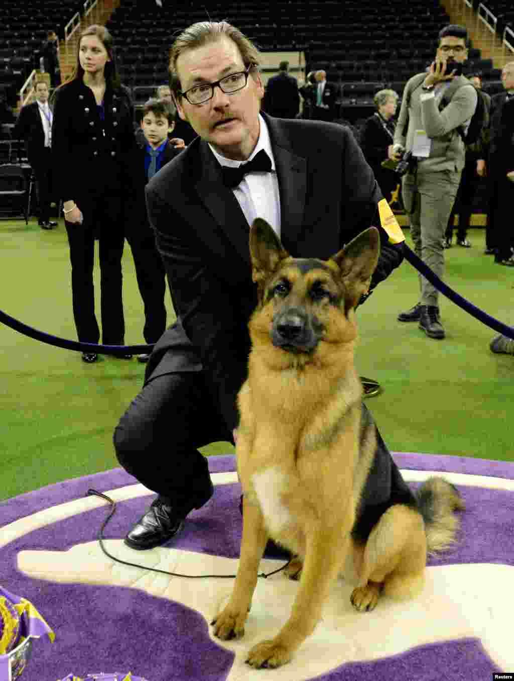 """""""رومر"""" , سگ نژاد ژرمن شپرد برنده چهل و یکمین نمایش سگ وستمینستر کنل کلاب در شهر نیویورک شد."""