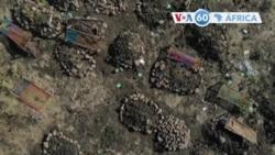 Manchetes africanas 26 novembro: AI afirma que as forças da TPLF mataram centenas de residentes da etnia Amhara na cidade de Mai-Kadra