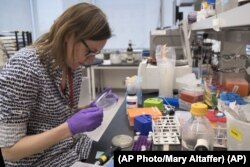 Leslie Mitchell, works at a New York University lab, where researchers are building man-made yeast DNA. Mitchell says it took her a couple months to build her chromosome. She says they are learning new rules about how cells operate. (AP Photo/Mary Altaffer)