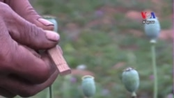 Addiction in Myanmar's Opium Growing Region
