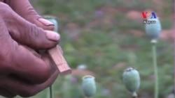 Addiction in Myanmar's Opium Growing Region