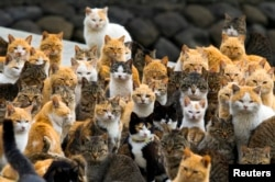 If you want to visit a remote corner of the world, try Japan's Aoshima Island. Rumor has it that cats rule the fishing island. (Reuters 2015.)