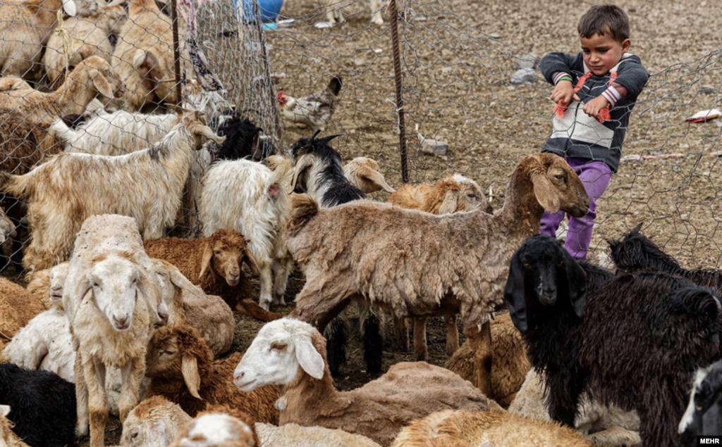 زندگی عشایر مغان در دامنه سبلان عکس: علی حامد حق دوست