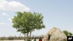 Les Bushmen, ou Bochimans, sont les doyens de l'humanité, puisqu'ils vivent en Afrique Australe depuis au moins 44.000 ans