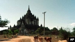A young Burmese boy tends his family's cows near the Thatbinnyu Temple in Bagan Saturday December 27, 1997. The temple, the tallest in Bagan, is one of 13,000 temples built on the plain which surrounds the city during the Era of the Temple Builders, a two
