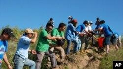 義工傳遞水桶灌溉剛種下的松樹苗