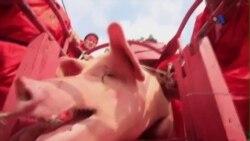 Lễ hội chém lợn ở Bắc Ninh gây nhiều tranh cãi