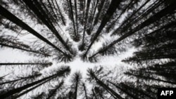 Деревья против парниковых газов: программа министерства сельского хозяйства США
