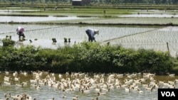 Tantangan utama dalam meningkatkan ketahanan pangan di Indonesia adalah jumlah lahan pertanian yang semakin berkurang (foto: dok).