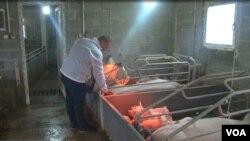 Igor Jočinac na svojoj farmi svinja u opštini Štrpce na Kosovu