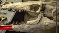 Triển lãm thủy quái 72 triệu năm trước tại Washington DC