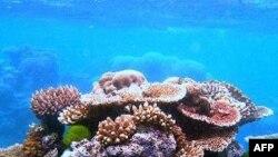Dãy đá ngầm san hô lớn nhất thế giới Great Barrier