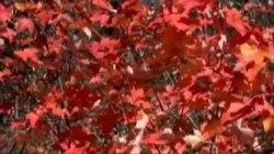 Паркова Алея Блю Ридж - найгарніше місце у США